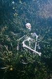 Скелет в траве 3 стоковое изображение