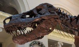 Скелет динозавра стоковое изображение rf