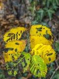 Скелет лист Стоковое Изображение