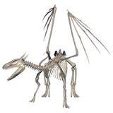 Скелет дракона Стоковые Изображения RF