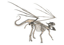 Скелет дракона Стоковое фото RF