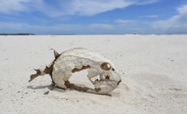 Скелет рыб с сохраненными масштабами Стоковое Изображение