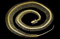 Скелет Rattlesnake Стоковые Изображения RF