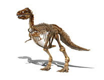 скелет t rex Стоковые Фото