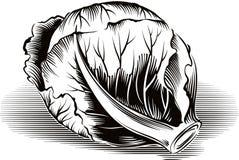 Склонность капусты против таблицы иллюстрация вектора