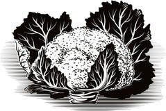 Склонность цветной капусты против таблицы иллюстрация вектора
