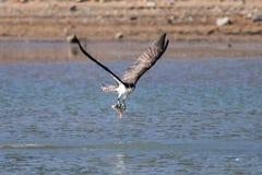 Скопаа улавливая рыбу Стоковые Изображения RF