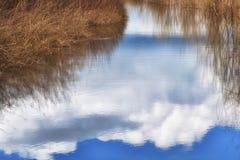 Скопируйте воды космоса отражая заболоченных мест стоковое изображение rf