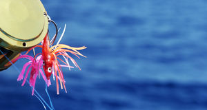 скопируйте глубокий космос моря прикормами рыболовства Стоковая Фотография