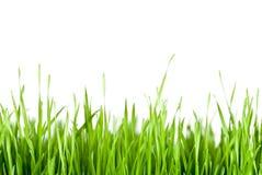 скопируйте космос зеленого цвета травы Стоковое Изображение