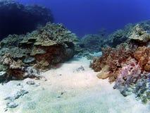 скопируйте космос места рифа kona Стоковые Изображения RF
