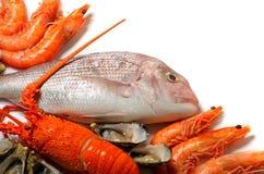 скопируйте космос продуктов моря стоковые изображения rf