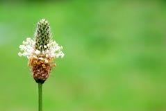 скопируйте космос цветка Стоковые Изображения RF