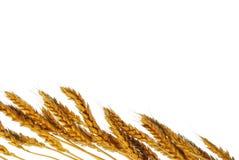 скопируйте пшеницу космоса стоковое фото rf