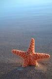 скопируйте starfish космоса стоковое изображение