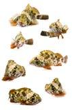 скорпион рыб Стоковые Изображения RF