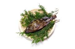 скорпион рыб Стоковое фото RF