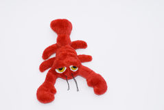скорпион Стоковое Фото