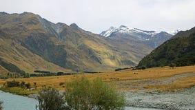 Скотины на холме в долине Matukituki Стоковые Изображения RF