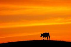 скотины twilight Стоковая Фотография