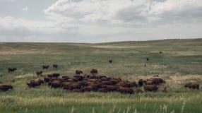Скотный двор на окраинах Денвера, Колорадо, Соединенные Штаты Стоковые Фото