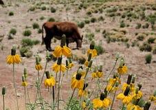 скотоводческое ранчо Аризоны Стоковая Фотография