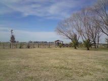 Скотоводческое хозяйство Аргентины Стоковые Изображения RF