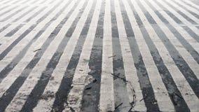 Скрещивание зебры Стоковое Изображение RF