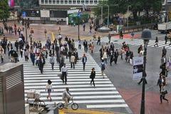 Скрещивание Hachiko Стоковая Фотография RF