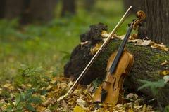 Скрипка в лесе осени Стоковые Фотографии RF
