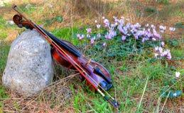 Скрипка против glade цветков леса Стоковая Фотография