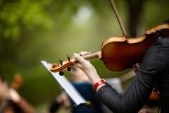 скрипка Стоковое Изображение