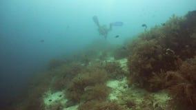 скуба водолаза подводное сток-видео