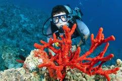 скуба красного цвета человека водолаза коралла Стоковая Фотография RF