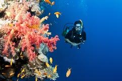 скуба красного цвета человека водолаза коралла Стоковые Фотографии RF