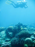 скуба подныривания приключения тропическое Стоковые Фото