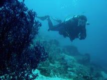скуба рифа philippines водолаза коралла Стоковое Изображение RF