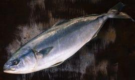 Скумбрия - большая сырцовая рыба моря Стоковое Изображение RF