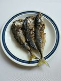 скумбрия зажаренная рыбами Стоковое фото RF