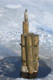 Скульптура зайца на мосте Ioannovsky Санкт-Петербург Стоковая Фотография RF