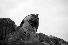Скульптура человека Стоковая Фотография RF