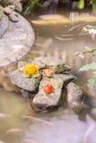 Скульптуры лягушки в саде Стоковые Фотографии RF