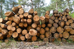 Складированные журналы сосны logging стоковое изображение rf