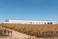 Склад и виноградники Tripple d обрабатывают землю в Kakamas Стоковая Фотография