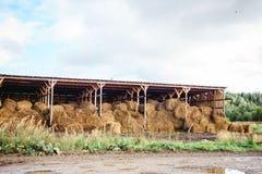Склад стога сена Стоковое Фото