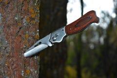 Складывая нож вставляя из дерева в лесе стоковое фото