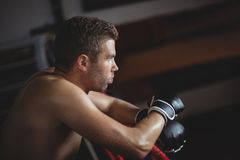 Склонность боксера на боксерском ринге Стоковое фото RF