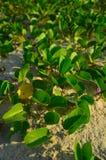 Слава утра пляжа Стоковое фото RF