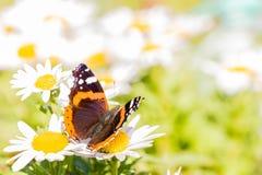 Славная бабочка с оранжевыми и белыми пятнами на крылах Стоковая Фотография RF