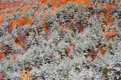 Славная снежная пуща Стоковая Фотография RF